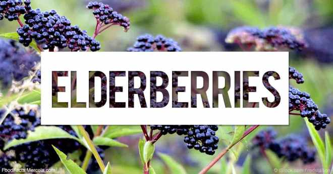 elderberries-fb