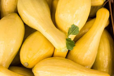 59807998-yellow-squash-for-sale-at-farmers-market-in-asheville-north-carolina